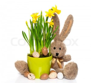 3590782-easter-decoration-with-eggs-narcissus-flowers-and-bunny