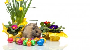 easter_bunny_eggs_violets_daffodils_white_background_78587_2048x1152